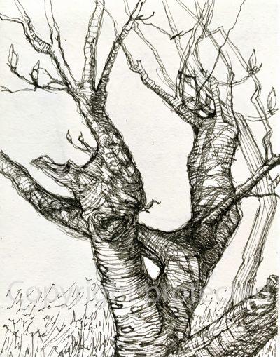 Gnarly Tree - sketchboook drawing