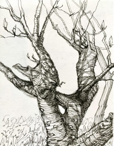 Gnarly Tree - sketchboook drawing