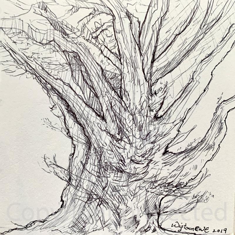 Wigtown Ewe Sketchbook