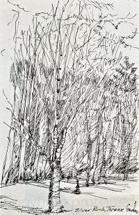 Silver Birch, Threave Gardens_Sketchbook